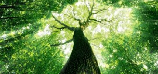 Want-to-Enjoy-a-Long-Happy-Life-Live-Near-Trees-Say-Researchers-3-350x233